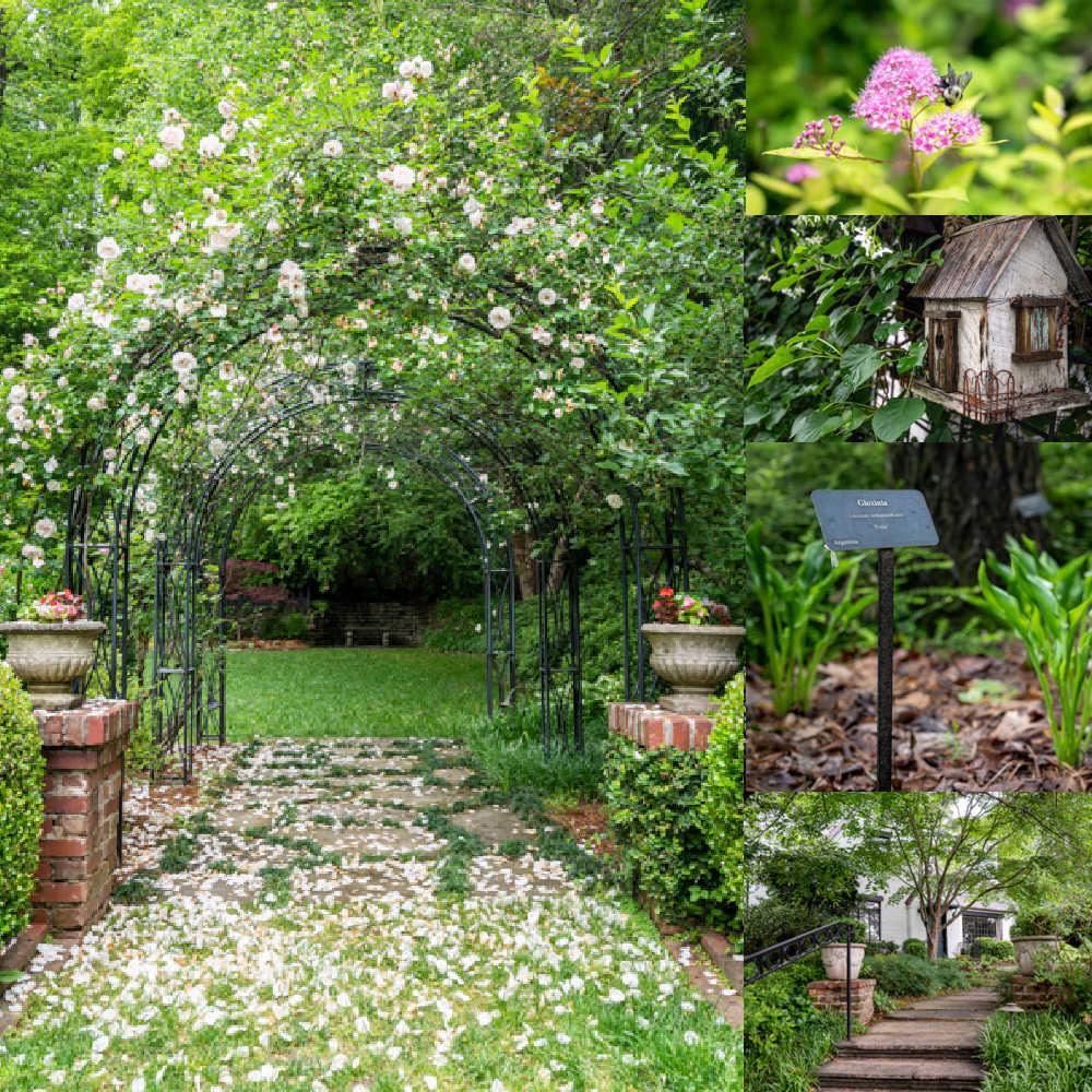 beautiful backyard photo montage
